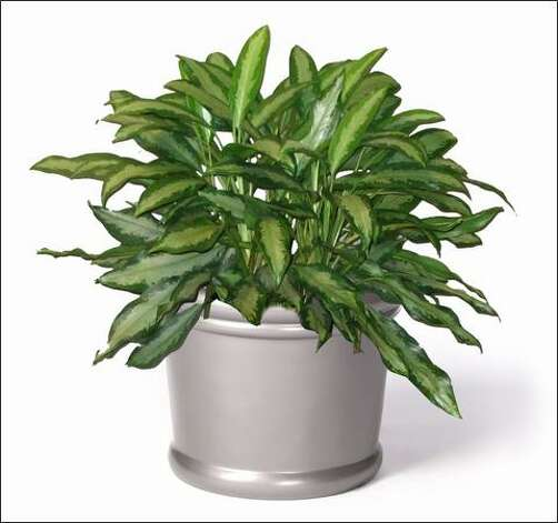 The grounded gardner you need a light touch for your houseplants - Hardy houseplants ...