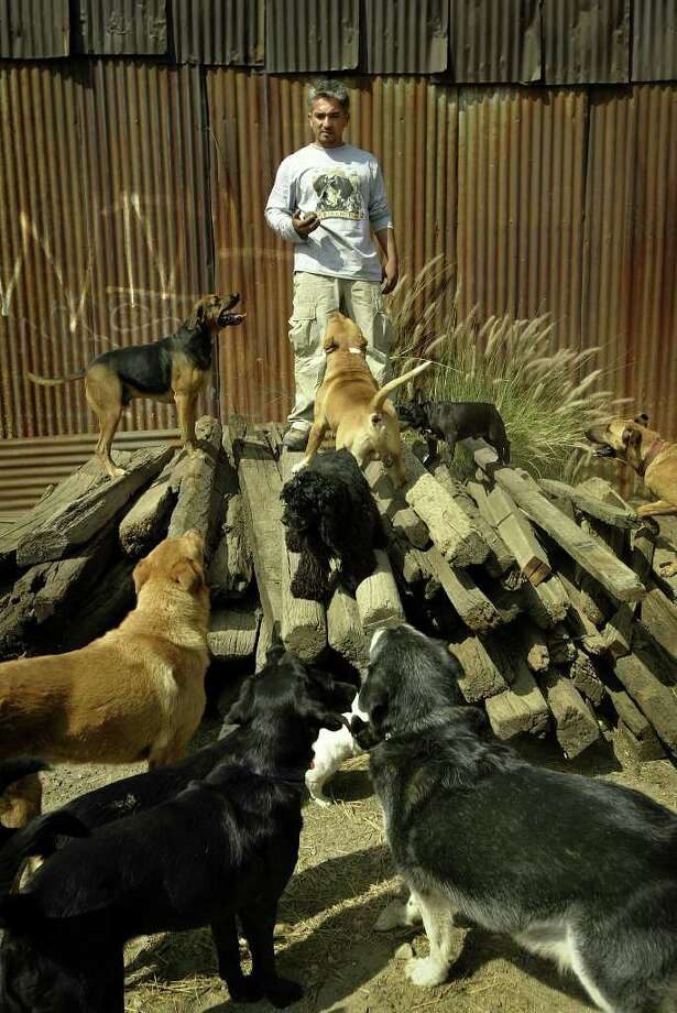 "Dog trainer Cesar Millan, the star of TV's ""The Dog Whisperer,"" is shown surrounded by dogs in this Sept. 15, 2004, photo in Los Angeles. Television producer Flody Suarez filed a lawsuit Thursday, May 4, 2006, against Millan, claiming that his Labrador retriever was injured at Millan's training facility after being suffocated by a choke collar and forced to run on a treadmill. (AP Photo/Los Angeles Times, Ricardo DeAratanha) ** MANDATORY CREDIT, NO SALES, NO FOREIGN, NO MAGS, TV OUT ** Photo: RICARDO DEARATANHA / LOS ANGELES TIMES"
