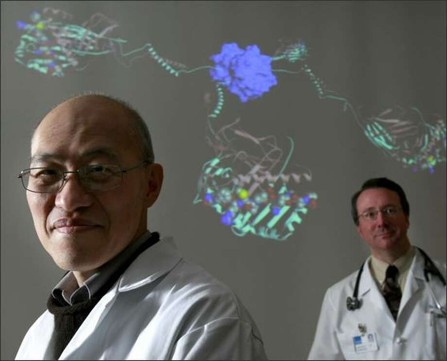 Drs. William Kwok, left, and David Robinson are trying to figure out how to more quickly diagnose allergies using tetramers, pictured in background, which are used to find allergen cells in blood. The work may lead to elimination of allergies. Photo: Meryl Schenker/Seattle Post-Intelligencer