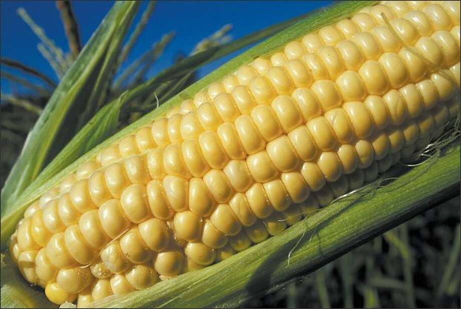 Se is twice as sweet as standard corn varieties. Because it germinates quickly, has the most tender kernels and doesn't need isolation from other varieties, it's a favorite for home gardeners. Photo: Purdue University