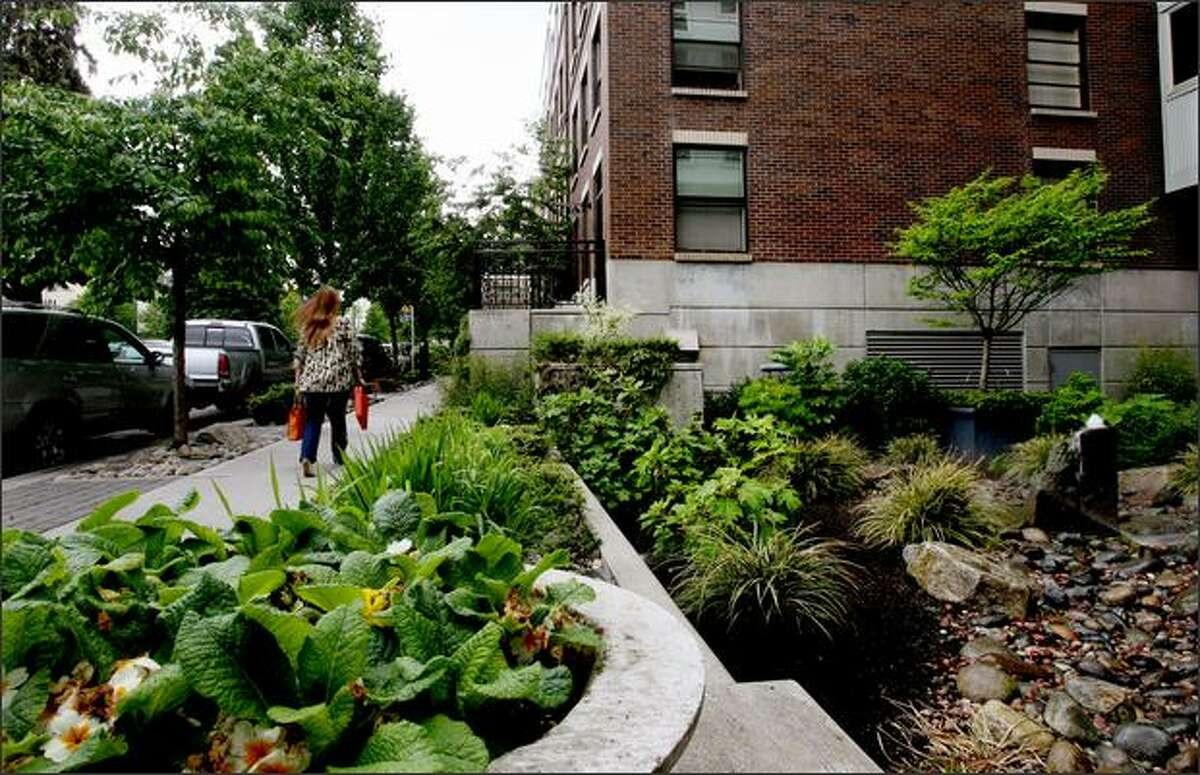 A landscaped sidewalk on the east side of the Alcyone apartments.