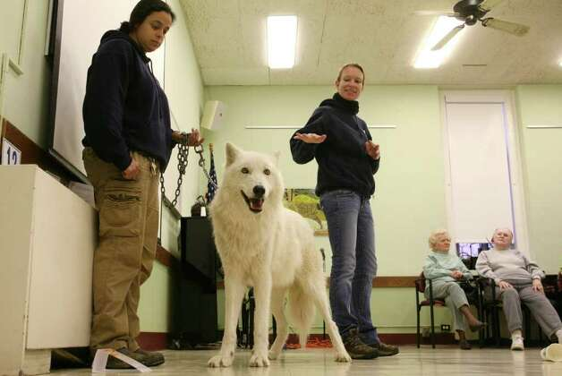 Wolf handler Rebecca Bose, left, of the Wolf Conservation Center in South Salem, N.Y., holds on to Atka, an Arctic grey wolf, as wolf educator Maggie Howell answers questions during a visit to the Greenwich Senior Center Wednesday morning.  March 23, 2011 Photo: David Ames, David Ames/For Greenwich Time / Greenwich Time Freelance