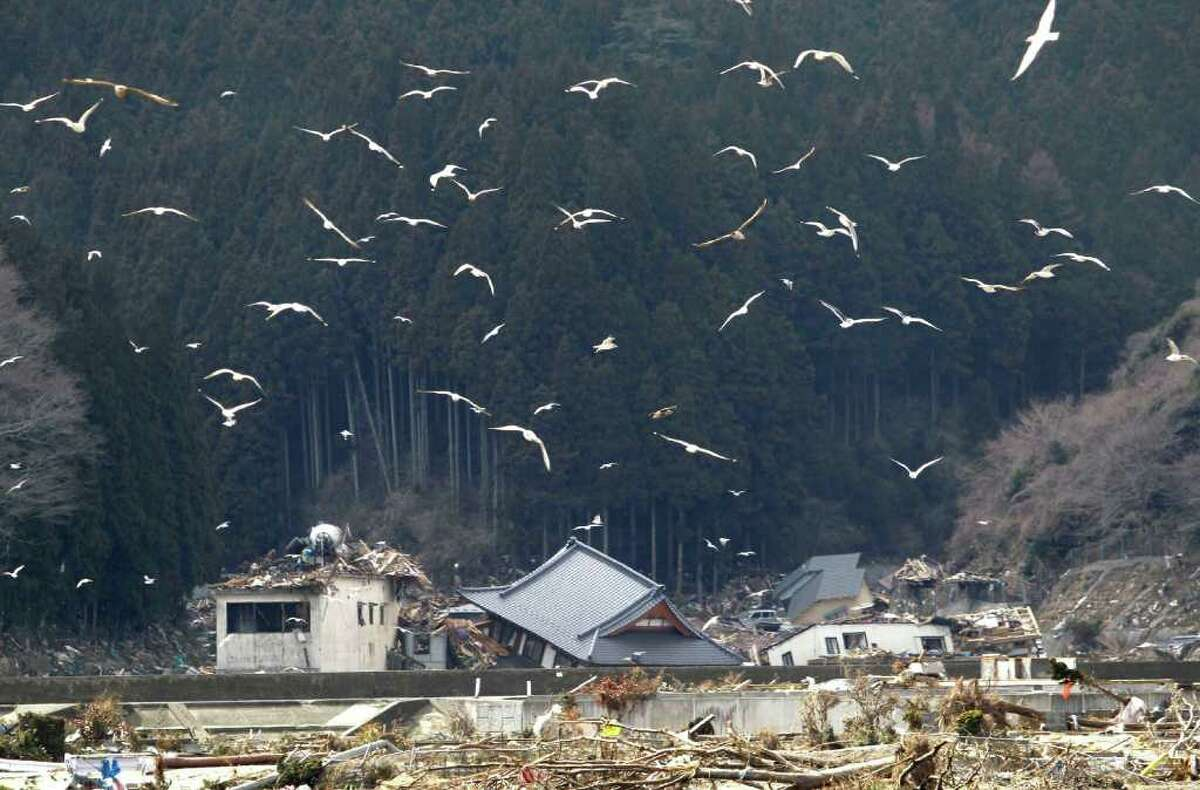 Seagulls fly over the earthquake and tsunami-devastated houses in Rikuzentakata, Iwate Prefecture, northern Japan, Wednesday, March 23, 2011. (AP Photo/Koji Sasahara)