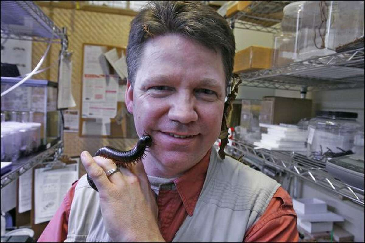Brian Rolf, owner of the Seattle Bug Safari, holds an African giant millipede.