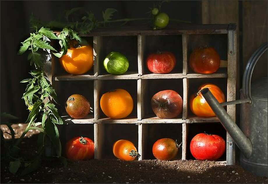 The many size, shapes and colors of heirloom tomatoes. Photo: Scott Eklund/Seattle Post-Intelligencer