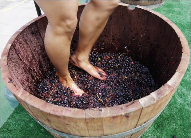 Stomping Grapes For Fun A Bottle Of Wine And Purple Feet