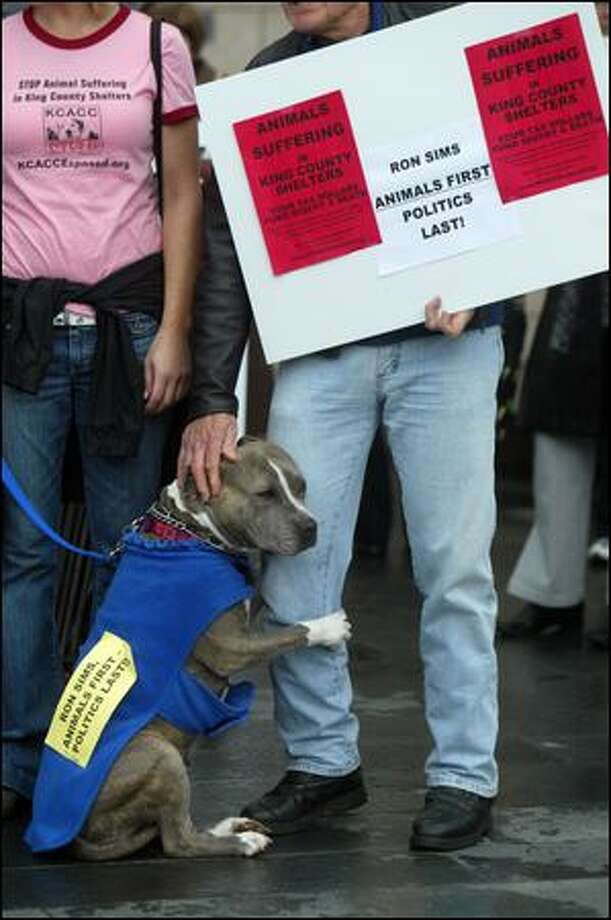 Bluebell, a pit bull, paws John Wagner Monday during a rally outside Seattle City Hall in support of a proposal that the county reduce its role in providing shelter and other services for animals. Photo: Karen Ducey/Seattle Post-Intelligencer