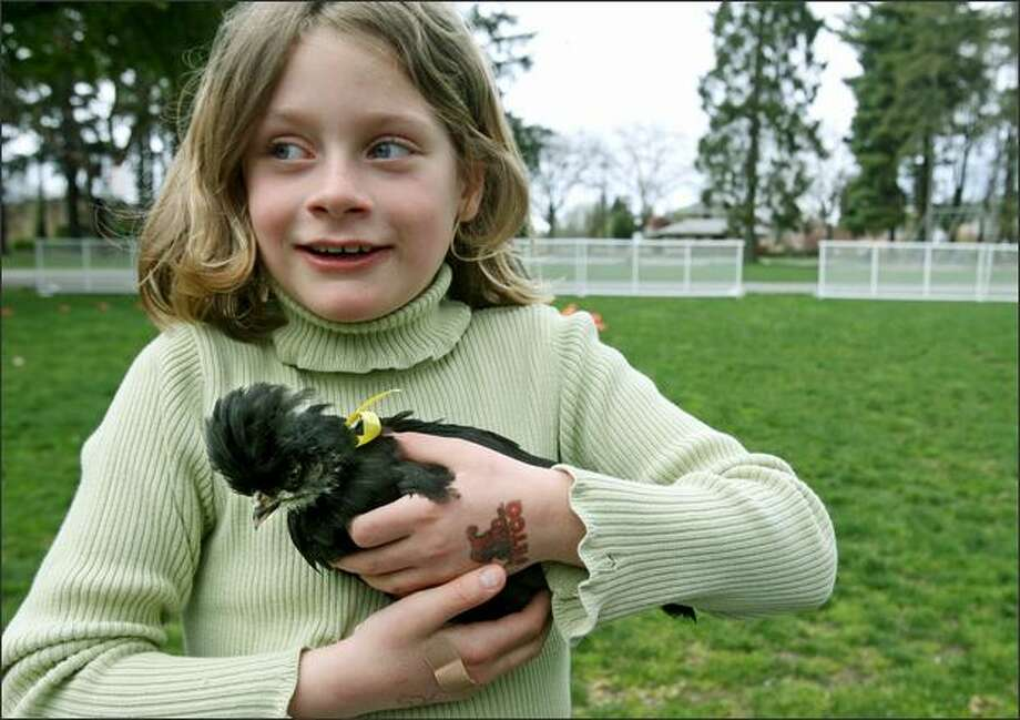 Eight-year-old Bianca Utterback of West Seattle holds Penguin, a Polish crested chicken, at the second annual Pet Rodeo & Snooty Walk in West Seattle's Hiawatha Park on Saturday. Penguin won the most unique pet category. The event was organized by West Seattle High's class of 2009 as a fund raiser for their prom and graduation. Nearly 50 pets competed in about a dozen categories including speediest pet, best trick, best costume, most obedient, obstacle course and most unique. Photo: Dan DeLong, Seattle Post-Intelligencer