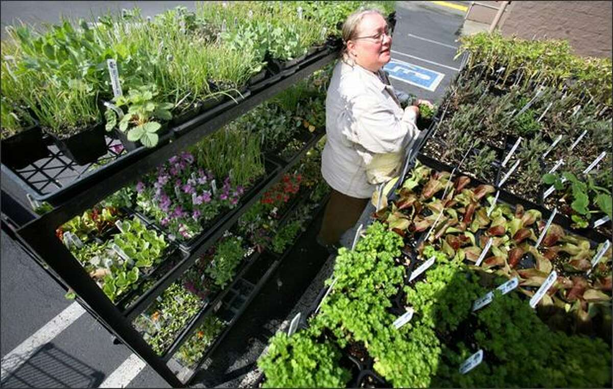 An avid gardener, Maggieh Rathbun shops for herbs to grow at her home.