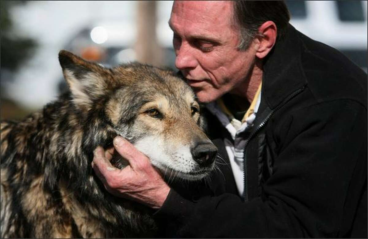 Dave Csaky, also known as Seattle's treehouse-dwelling Squirrelman, talks to Nikita, a wolf-hybrid, on a rural property in Skagit County where he now lives as a caretaker.