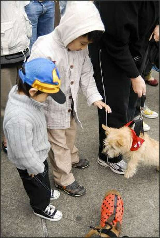 Children pet one of the participants in the Strut Your Mutt Parade at Pike Place Market on Sunday. The parade was part of the Pike Place Market Street Festival, which was Saturday and Sunday. Photo: Nicole Safker, Seattlepi.com