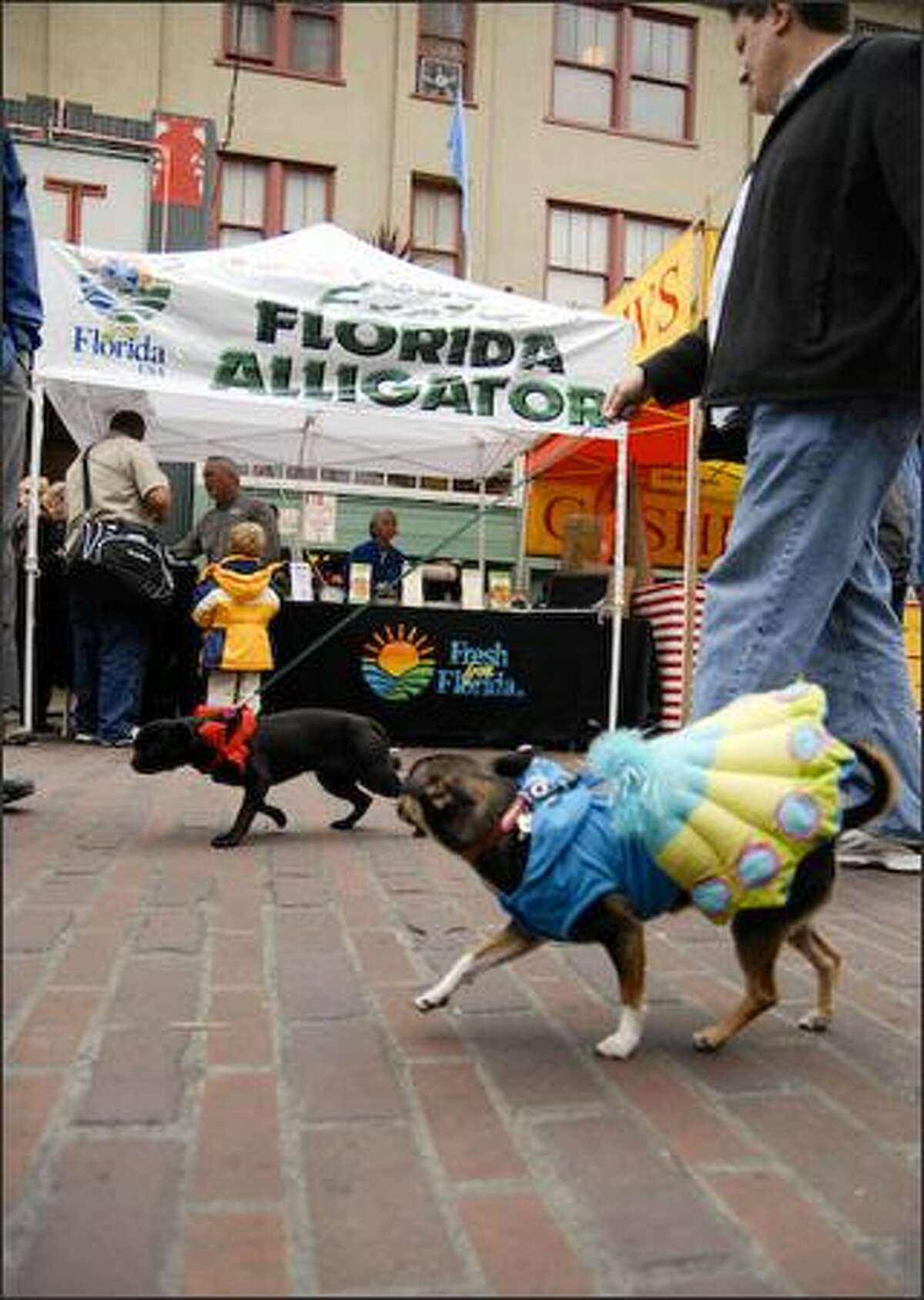 Two costumed dogs strut past a stand advertising Florida alligator meat during the Strut Your Mutt Parade on Sunday at Pike Place Market.