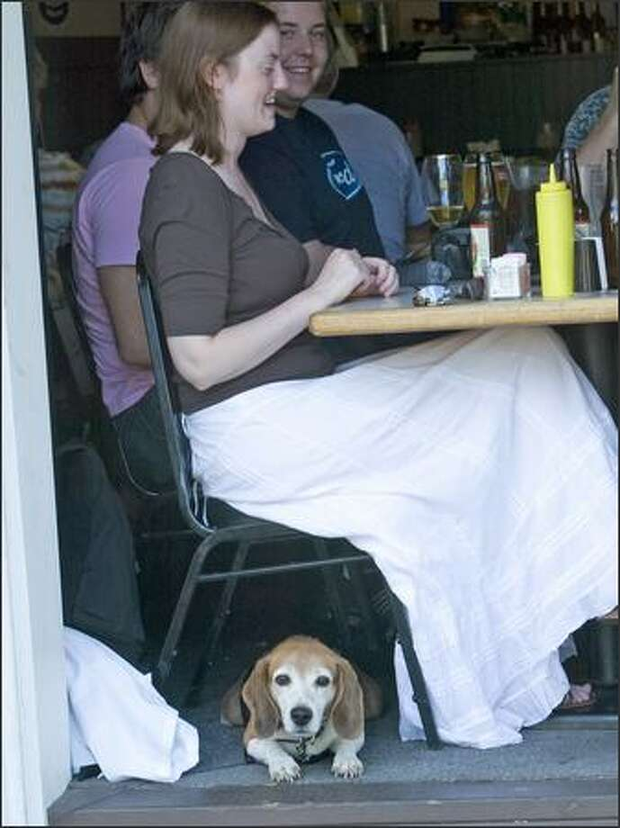 Jack the Beagle finds a place in the shade under the chair of his owner, Julie Troisch, while she enjoys The Village Pub and watches the crowd looking at the cars. Photo: Grant M. Haller, Seattle Post-Intelligencer