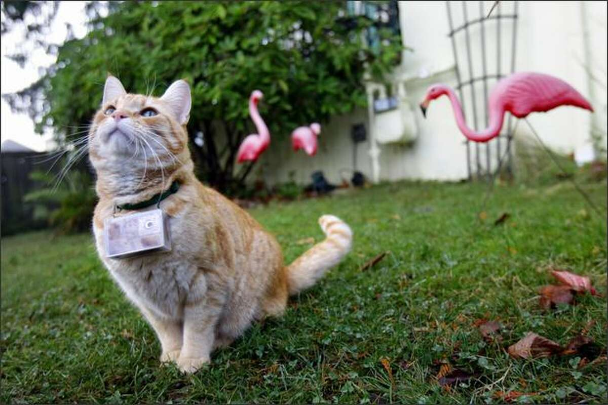 """Cooper explores his front yard with a camera around his neck. The pictures made during his travels are featured on Saturday's episode of """"Cats 101."""""""