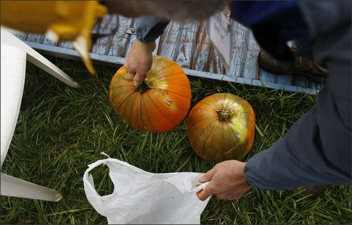 A nine-pound, two-ounce pumpkin is about to be hurled.