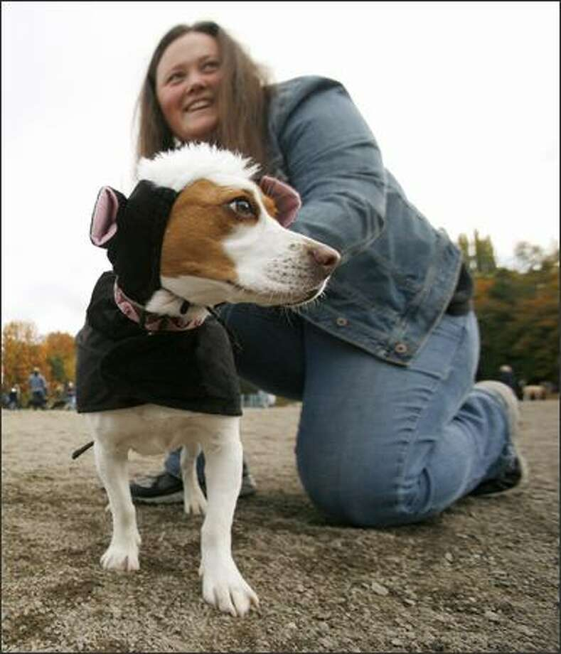 Sarah Carney adjusts the costume of her beagle, Josie. Photo: Paul Joseph Brown, Seattle Post-Intelligencer
