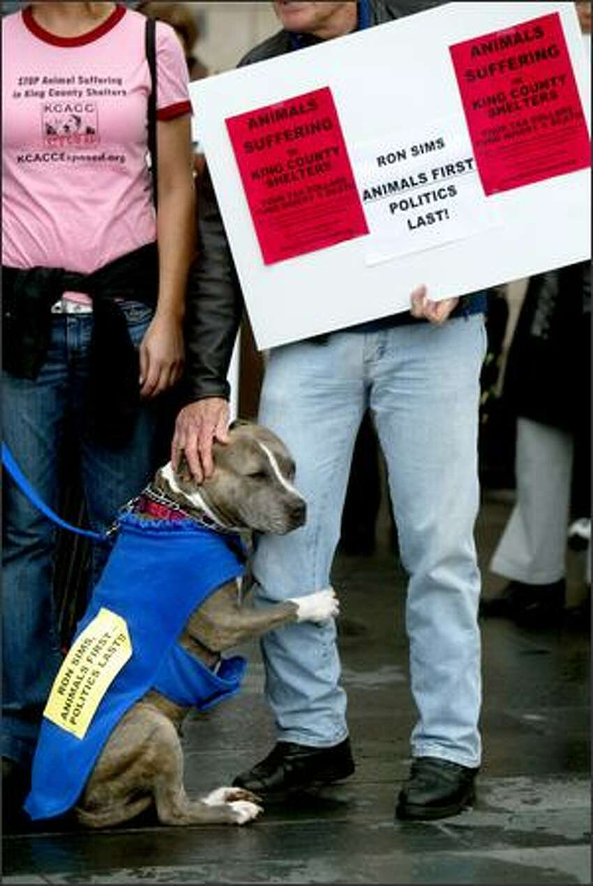 Bluebell, a pit bull, paws John Wagner during a rally outside Seattle City Hall in support of a proposal that the county reduce its role in providing shelter and other services for animals.Ducey: As a colleague pointed out at the protest, the beauty of this photo is that the dog is a pit bull. If it was a golden doodle ... well yeah, whatever.