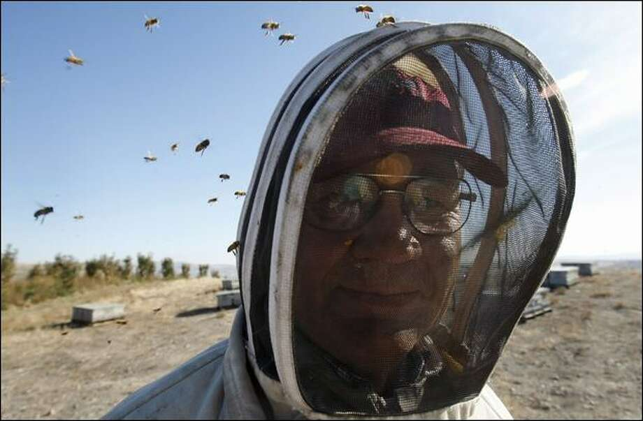 Eric Olson, who manages about 13,000 hives at his Olson Honey Co. in Yakima, gets ready to take some of his hives to Southern California to pollinate crops. Photo: Meryl Schenker/Seattle Post-Intelligencer
