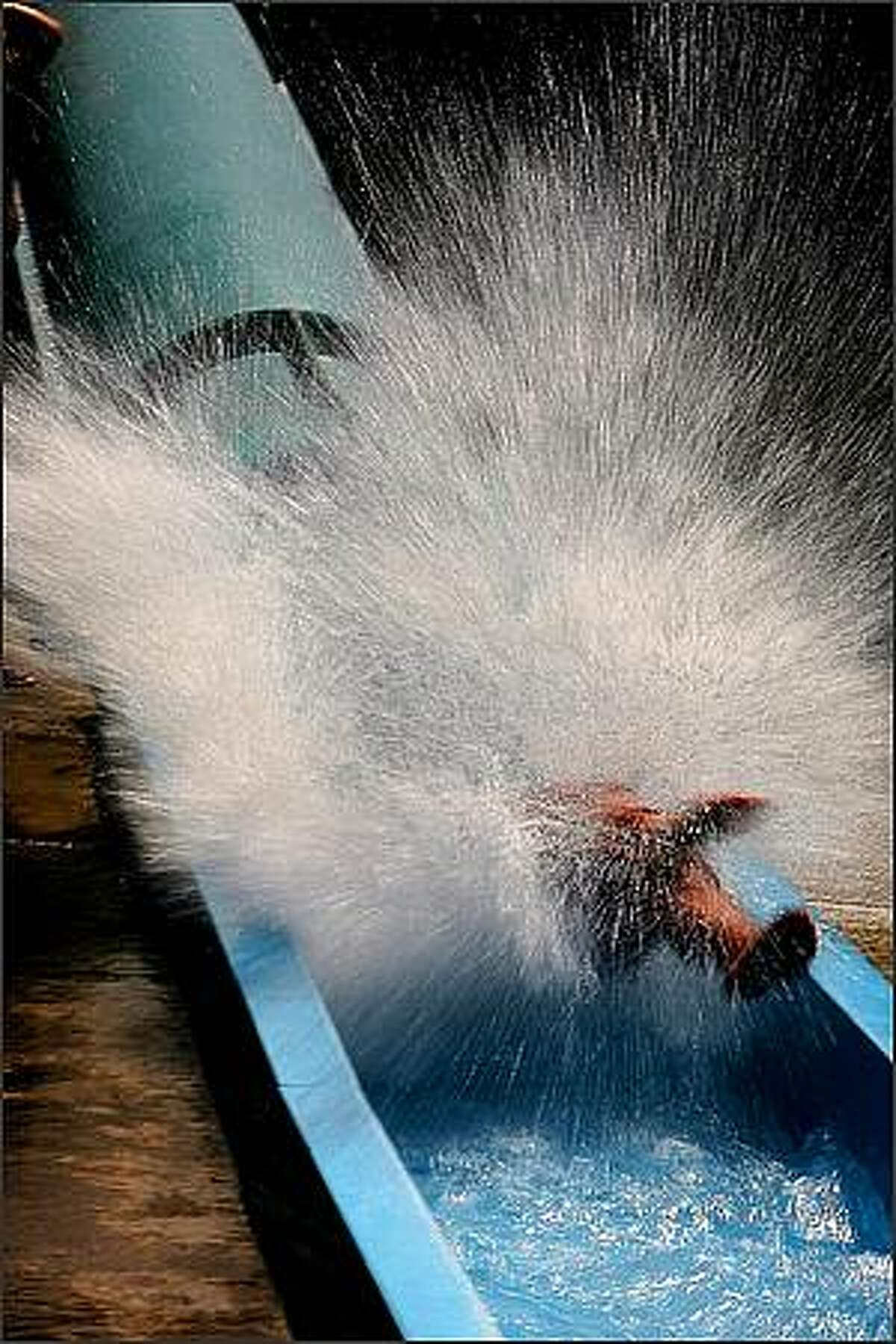Visitors to Wild Waves in Federal Way shoot down a hydro slide.