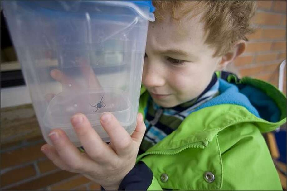 Seven-year-old Timothy Rabin Hagemann holds a plastic container holding a deadly female Black Widow spider he and his family brought to the Woodland Park Zoo on Sunday. Photo: Jim Bryant/Seattle Post-Intelligencer