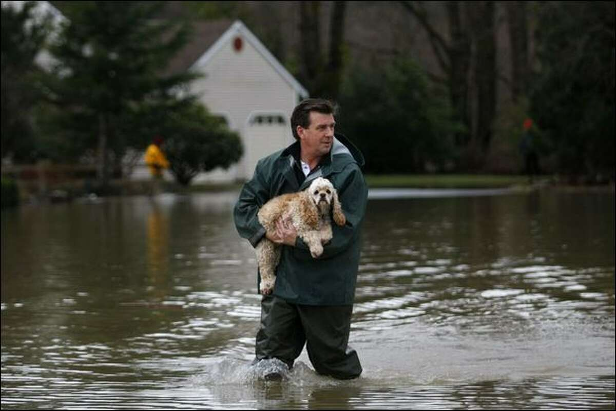 Pat Kelley carries his dog Paige through floodwaters to a piece of dry land to do her business near his home in Snoqualmie on Thursday.