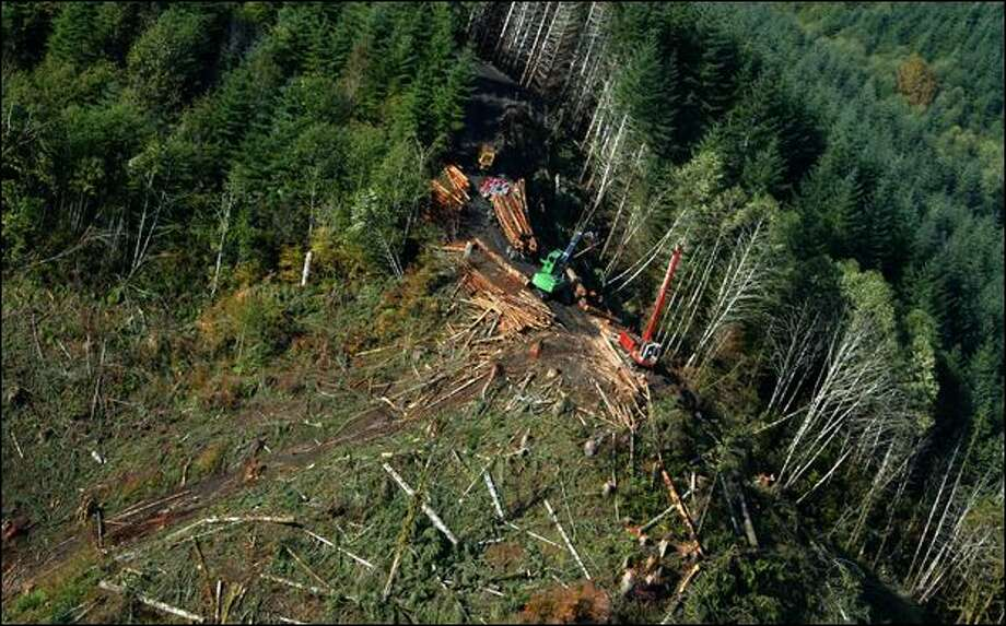 An aerial view shows loggers harvesting timber at Camp Delezenne Boy Scout Camp near Elma on Oct. 14. The harvest brought in $140,000, council officials said. Photo: Gilbert W. Arias/Seattle Post-Intelligencer
