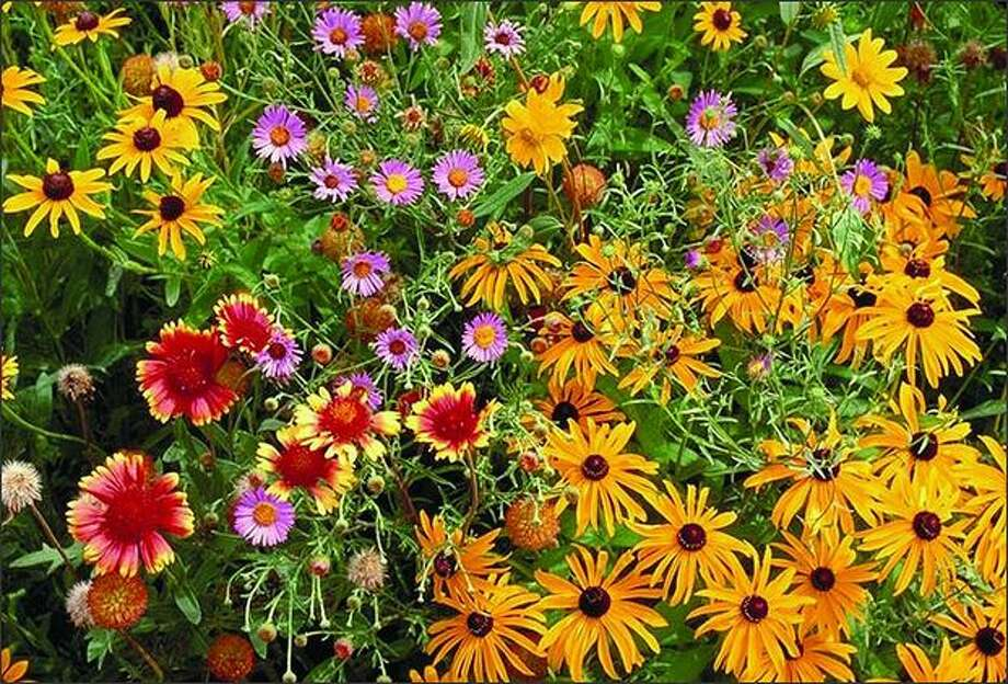 Beneficial Bug Mix is a blend of 18 kinds of flowering plants. Photo: Territorial Seed Co.