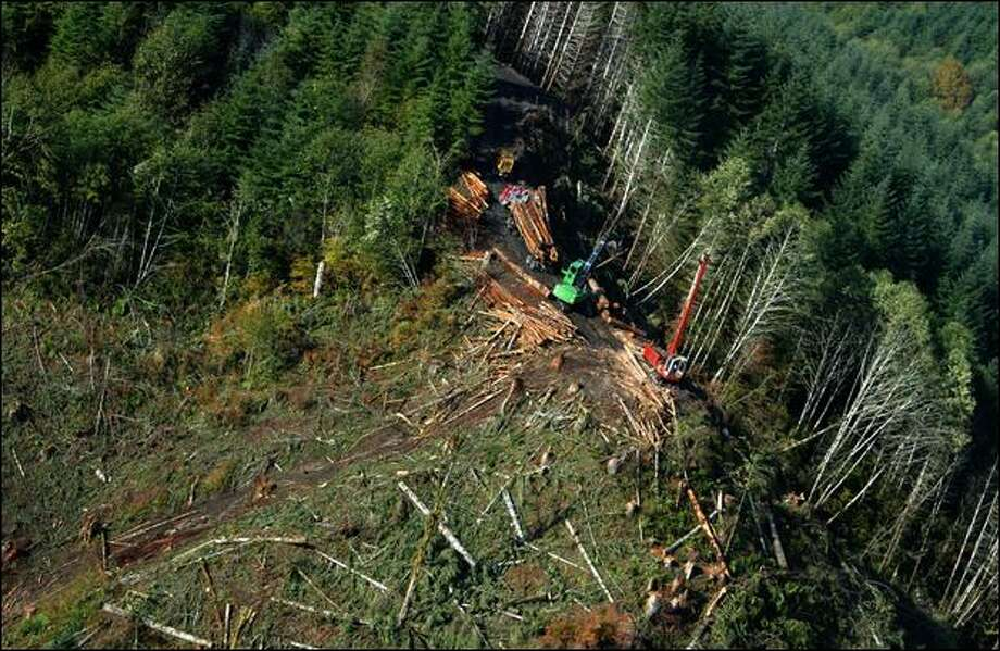 Loggers harvest timber at Camp Delezenne near Elma in 2008. An expert hired by the Seattle P-I said there were violations of forest practice rules during the harvest on Boy Scout land. Photo: Gilbert W. Arias/Seattle Post-Intelligencer