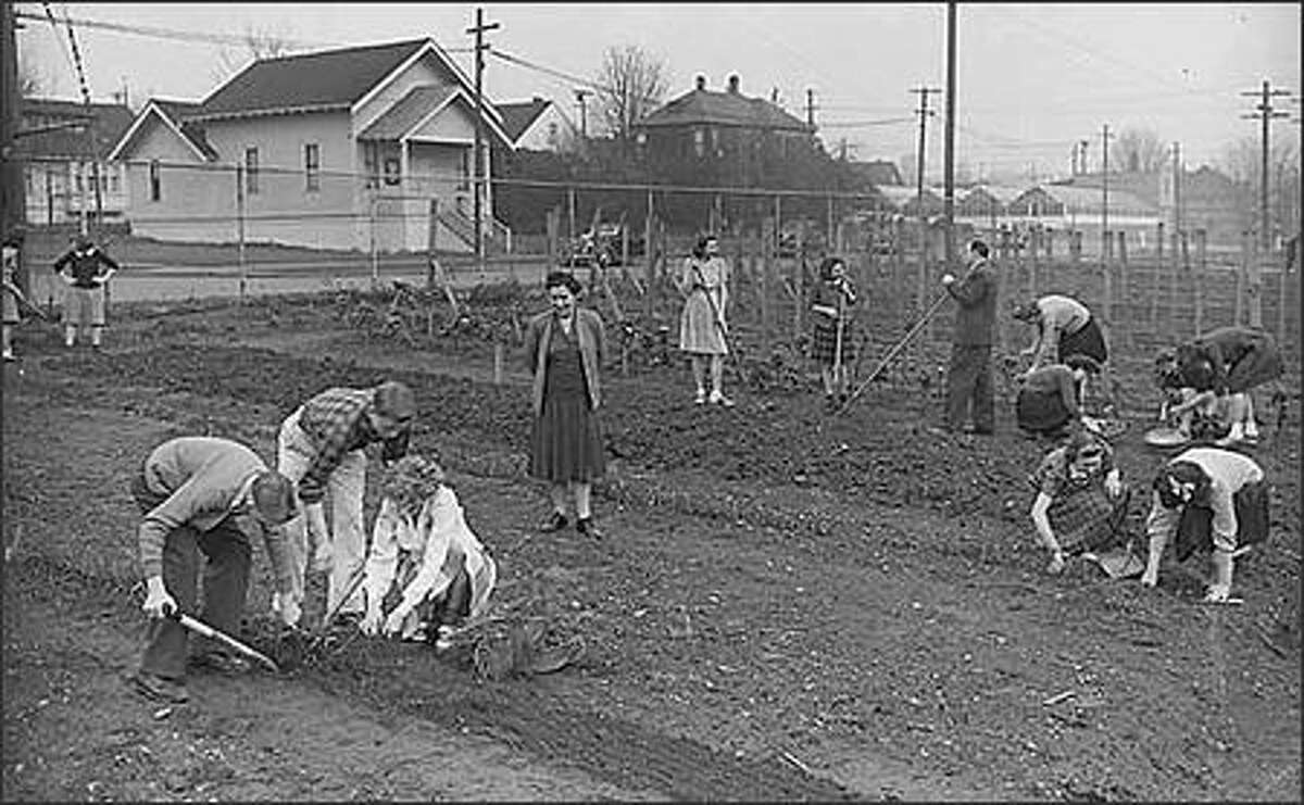 Although backyard vegetable gardens have been popular for years, they were especially common during World War II. All over the United States, people turned unused yard space and vacant lots into Victory Gardens to raise fresh produce. This 1943 photo shows Ballard High School students and teachers working in their garden. (Seattle Post-Intelligencer Collection, Museum of History & Industry 28244)