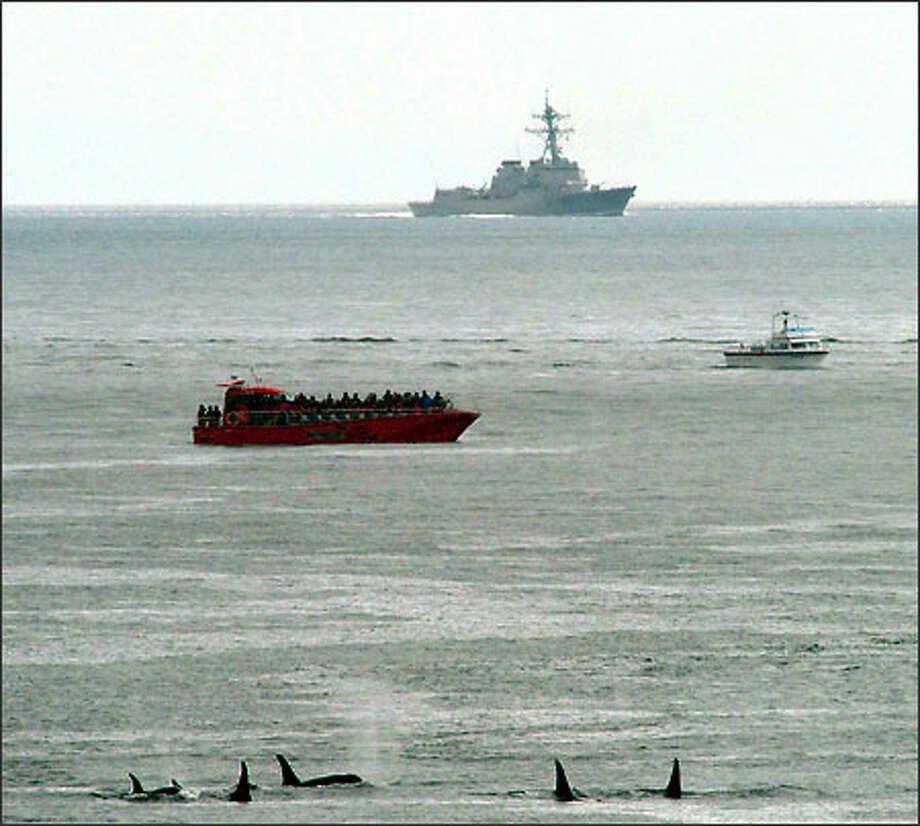 A pod of killer whales, bottom, swims near a whale-watching boat and the USS Shoup in the Haro Strait near San Juan Island on May 5, 2003. The U.S. Navy says the destroyer was using powerful, mid-frequency sonar as it traveled through the Haro Strait to Vancouver Island at the same time that some whale watchers reported orcas and porpoises fleeing the area.  (Photo courtesy of Ken Balcomb)