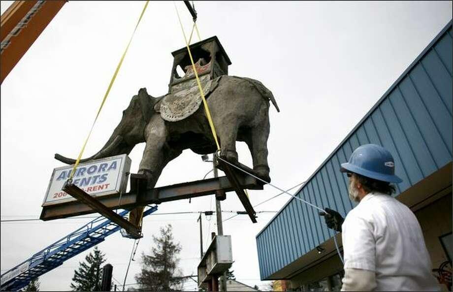 Elephant On Aurora Removed Seattlepi Com