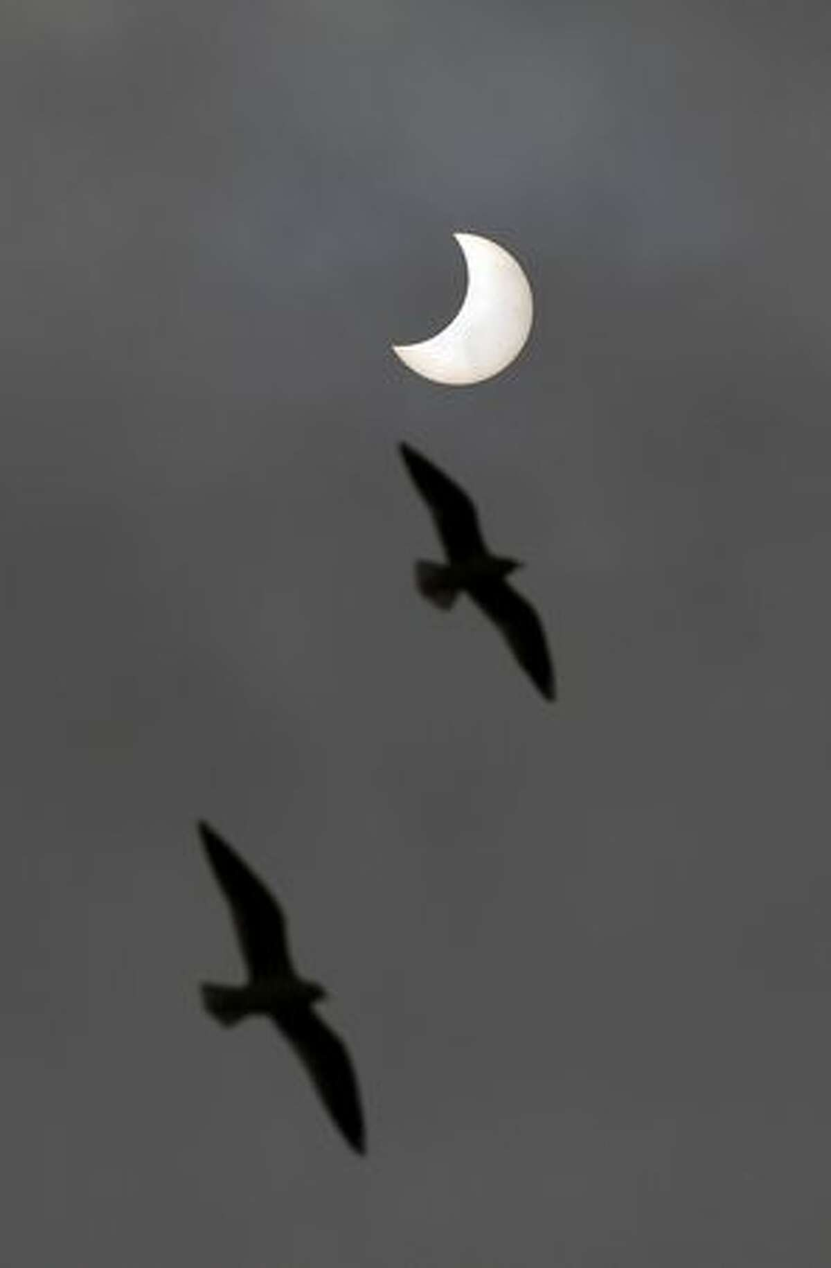 Birds fly past as a solar eclipse is seen from Allahabad.