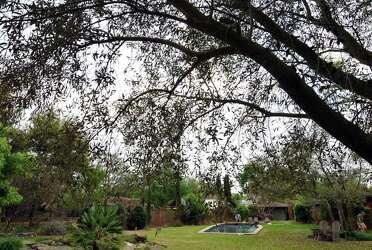 Gardening with a Mediterranean flair - San Antonio Express-News