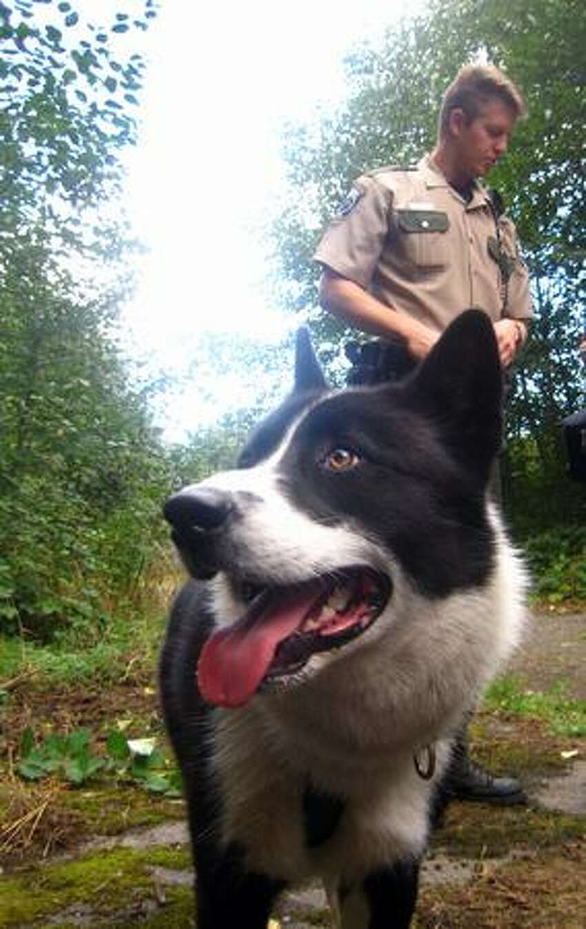 A Department of Fish and Wildlife officer with a Karelian bear dog near the cougar trap in Discovery Park.