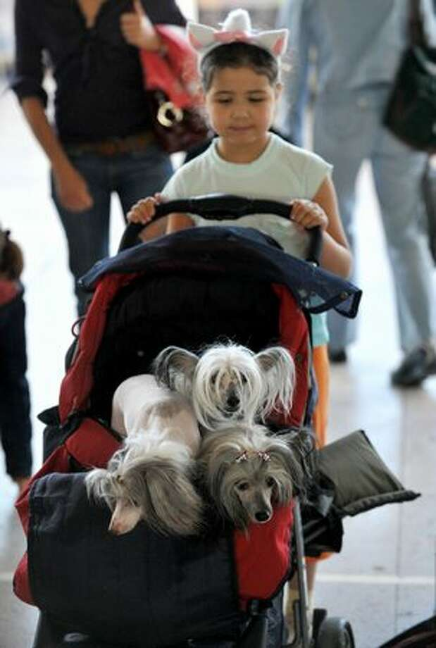 A girl with her dressed-up dog during an international dog show in Minsk, Belarus Photo: Getty Images