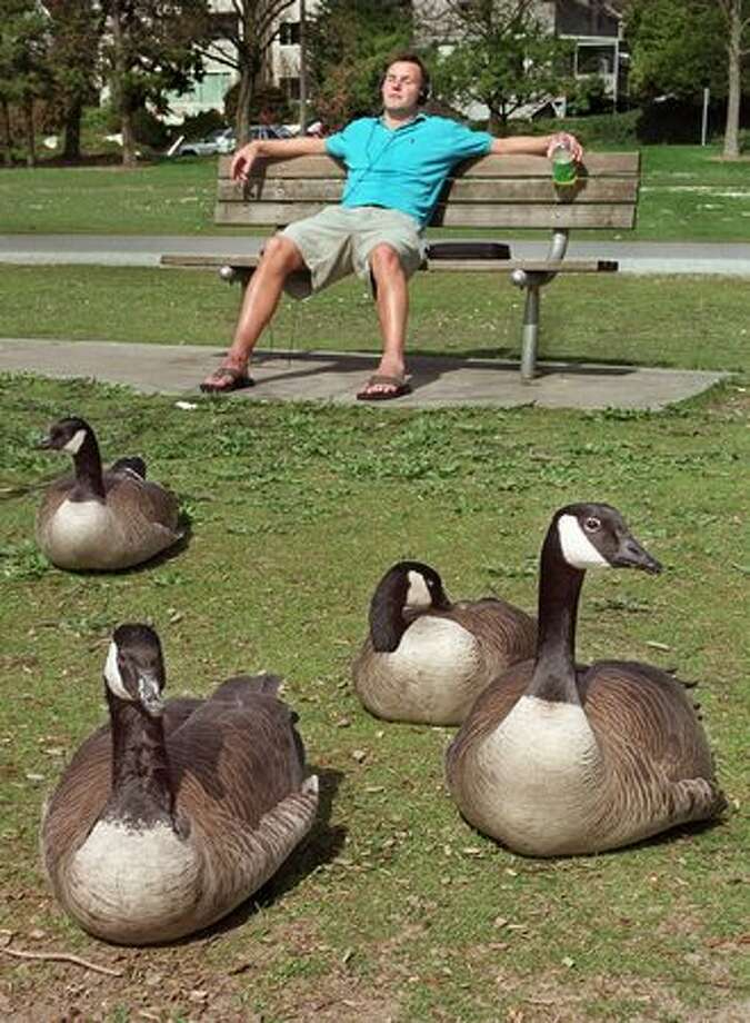 The 2000 caption read: Kristian Brand, 22, a University of Washington student from Bainbridge Island relaxes among the Canada geese at Green Lake. Photo: P-I File