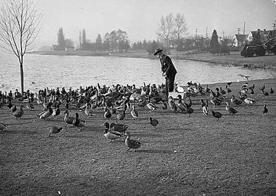 Man feeding birds at Green Lake, 1945. (Seattlepi.com file/MOHAI) Photo: P-I File