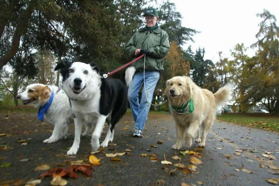 The November 2004 caption read: Jack McGannon from Seattle walks around Green Lake everyday with his dog Ripley, center, as exercise for the both of them. His daughter in-law's dogs, Bandit, left, and Bear, right, accompanied them on this day. (Karen Ducey/Seattlepi.com file) Photo: P-I File