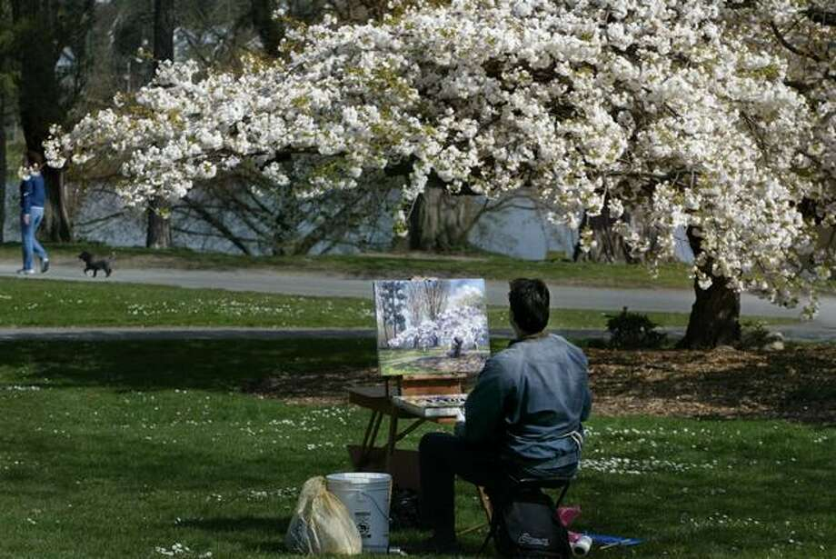 The March 2005 caption read: Seattle artist James Prouty takes advantage of the beautiful weather and calm conditions to set up his easel and canvas to capture the blossoms in bloom on the north side of Green Lake. Photo: P-I File