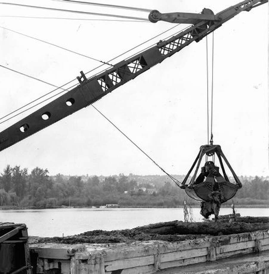 The May 1961 photo caption read: A clam shovel digs out silt from Union Bay at Foster's Island in the Arboretum. Photo: P-I File