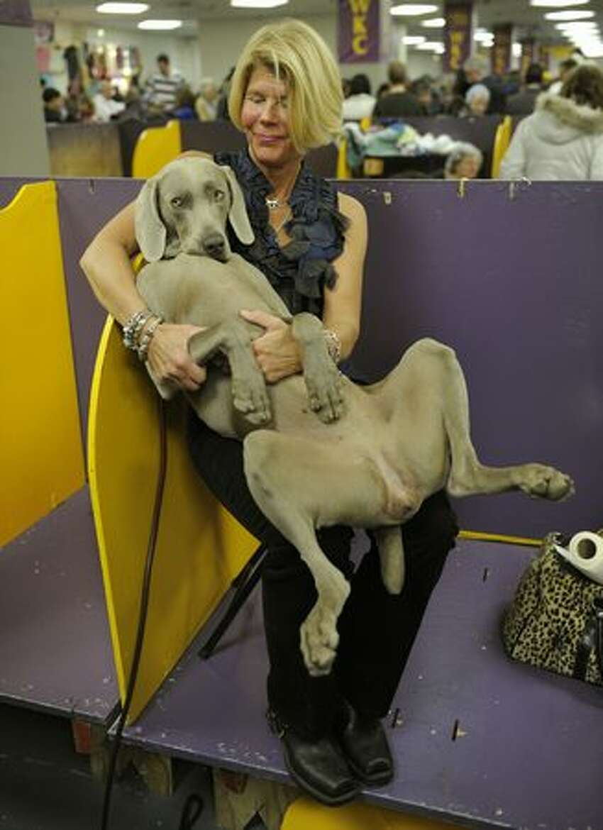 Jennifer Martin, with her Weimaraner named Sizzle, during the final day of the 134th Westminster Kennel Club Dog Show at Madison Square Garden in New York, February 16, 2010. The country's premier dog show runs for two days with the Best in Show picked tonight.