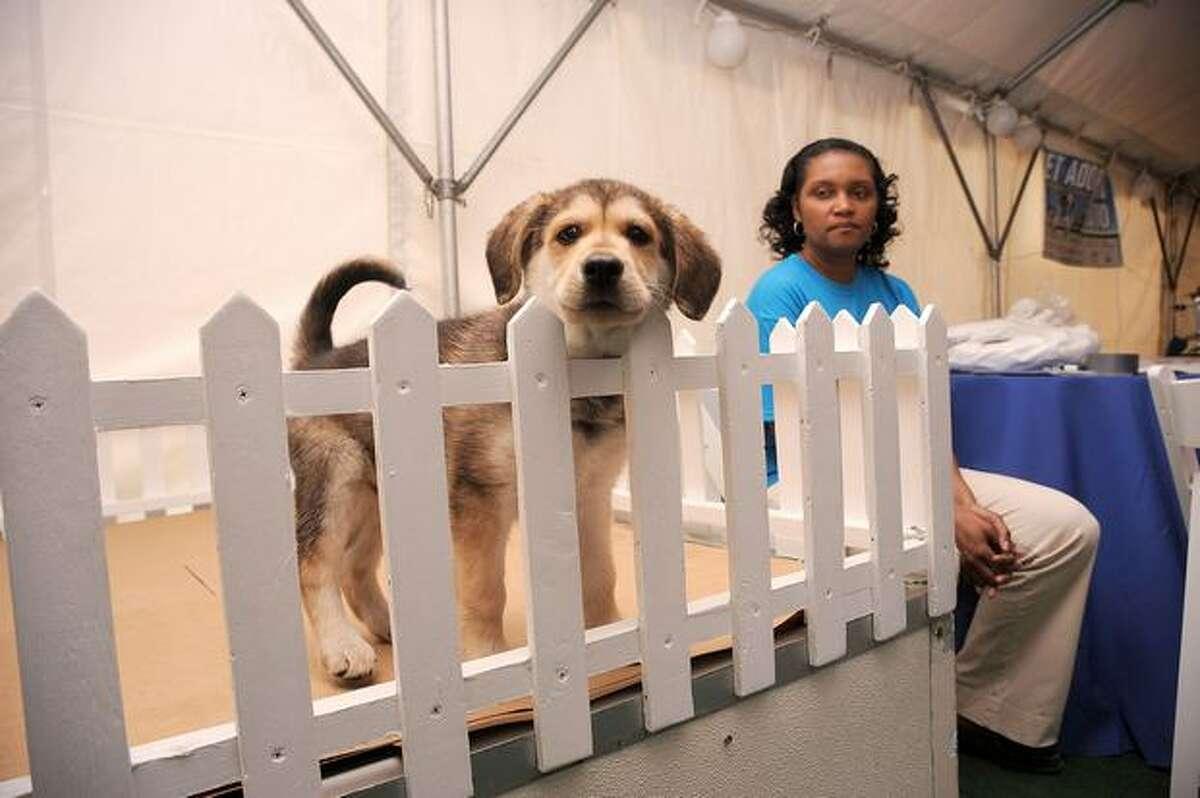The Animal League's Global Pet Adoptathon at North Shore Animal League America in Port Washington, New York.