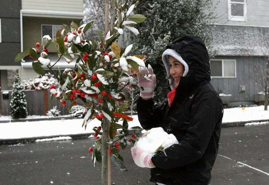 Melissa McCash, 12, gathers snow off of a tree for a snowman in Seattle's Ballard neighborhood on Mo