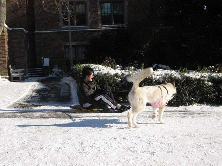 An attempt at dog-sledding at the University of Washington campus the day after snowstorm blew into Seattle. Photo: Vanessa Ho, Seattlepi.com