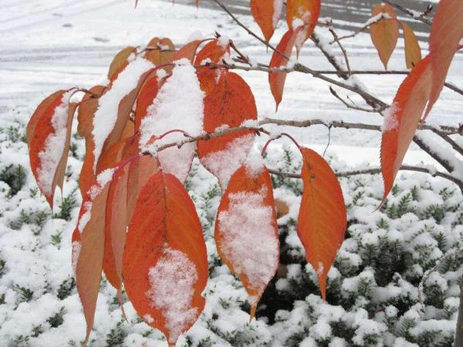 Snow blankets fall colors in the Seattle neighborhood of Montlake on Monday. Photo: Vanessa Ho, Seattlepi.com