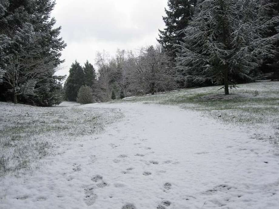 Snow blankets the Washington Park Arboretum in Seattle. Photo: Vanessa Ho, Seattlepi.com