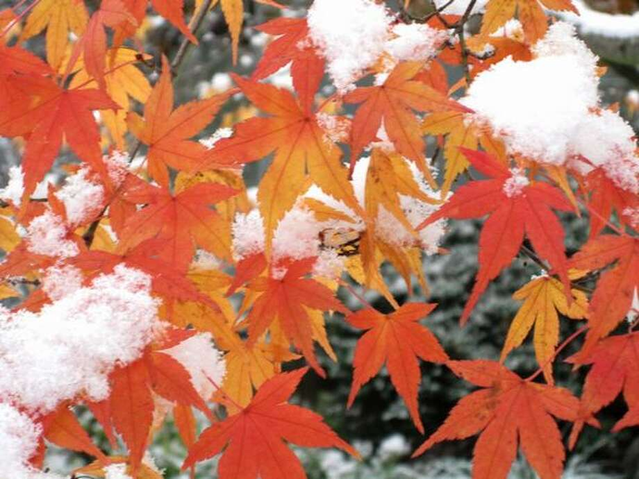 Snow blankets fall colors in the Seattle neighborhood of Montlake. Photo: Vanessa Ho, Seattlepi.com