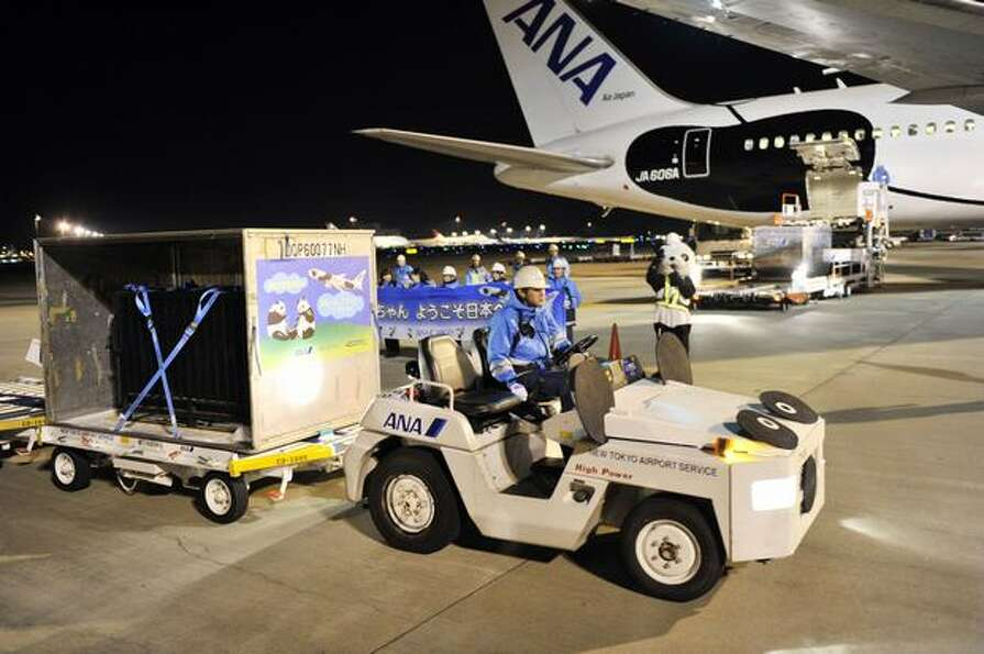 A pair of giant pandas arrive at Tokyo's Narita International Airport from China on February 21, 201