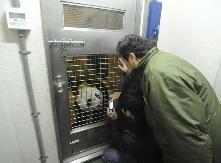 In this photo released by Ueno Zoological Gardens, known as Ueno Zoo, Ueno Zoo Director Teruyuki Komiya, top, and a Chinese panda keeper check female Xiannu, one of two giant pandas flown in to Japan from China in a new house after arriving at Tokyo's Ueno Zoo early Tuesday, Feb. 22, 2011. Japan hopes that the two pandas will help warm bilateral ties strained over a territorial spat -- and give Tokyo's economy a jolt, too. (AP Photo/Ueno Zoological Gardens) Photo: Associated Press