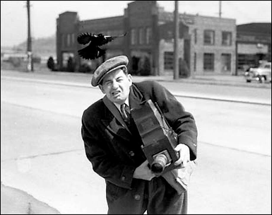 May 14, 1943. When the city desk sent Art French down to Fire Station No. 14 to take a picture of a dive bombing blackbird, the photographer himself became a target. An alert reporter took one of the cameras and caught the aggressive bird in the act. Photo: Seattle Post-Intelligencer